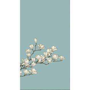 White Orchidee