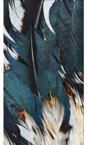 Feather Dream