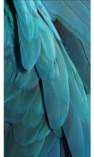 Blue Feather Dream